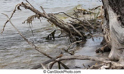 River bank with roots