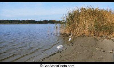 River beach in national park Latvia