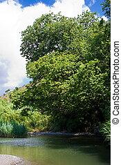 Details of a river bed with vegetation