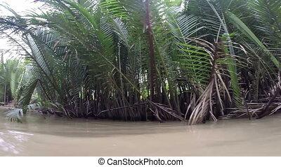 River boat trip Mekong Delta canal Vietnam Rainforest