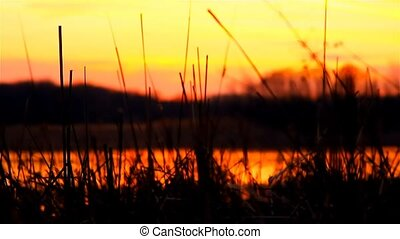 river bulrush grass at sunset orange nature landscape -...