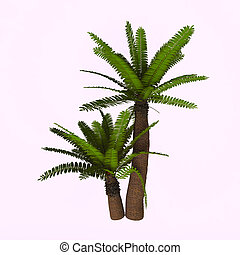 River Cycad Plants - Cycads are seed plants with a long...