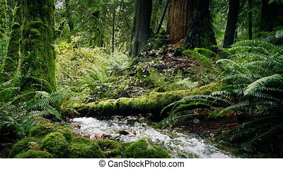 River Deep In The Woods - Pretty outdoors scene of river...