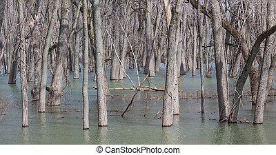 River Deluge - After spring rains a river overflows it banks...