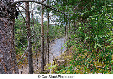 River Druie in the Cairngorms National Park, Scotland -...