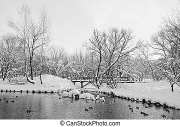 river, ducks and wooden bridge in winter park black and white