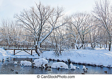 river, ducks and wooden bridge in winter park