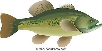 River fish - Predatory fish green living in freshwater