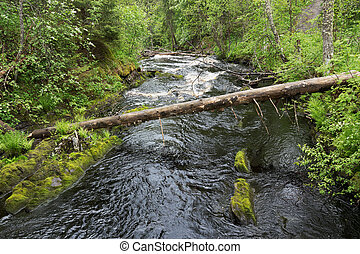 River flow in the green forest