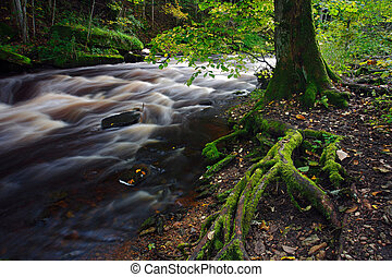 River flowing among tree roots in a forest.