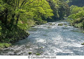 River flowing beside fresh green trees in Kagoshima