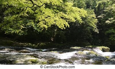River flowing rock slope under flesh green painted maple...