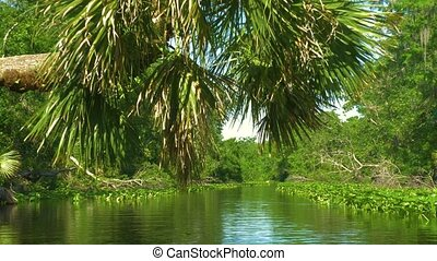 River flows through the rainforest in the jungle. Tropical...