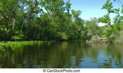 Tropical river with forest on the banks. - River flows...
