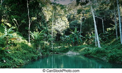 River flows through tropical rain forest - River calmly...