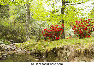 River in a garden with red azaleas