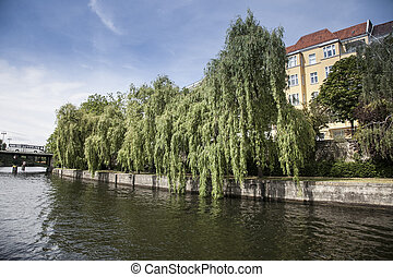 river in berlin - river in center of berlin with green tree