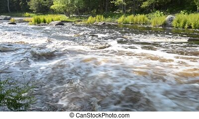River in Forest, With sound. High definition. Location:...