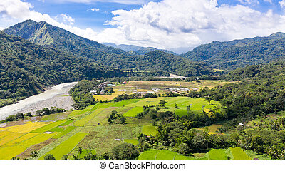 River in mountain valley with bright meadow. Natural summer landscape.