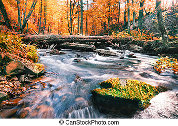 River in the autumn forest