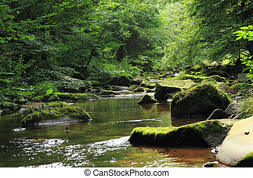 river in the czech forest