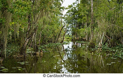 River in the Everglades - The Everglades are subtropical...