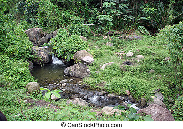 Green forest area and small river in Grenada