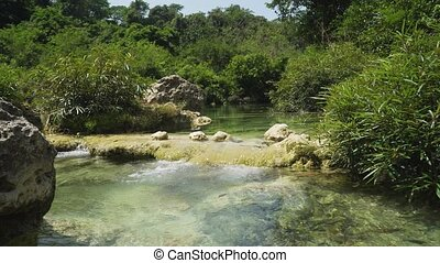 River in the rainforest. - River flows through the...