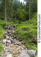 River inside a forest in the italian dolomites