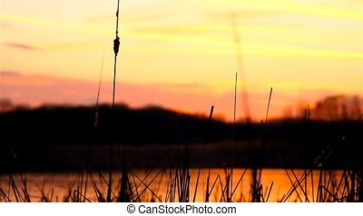river landscape bulrush grass at sunset orange nature -...