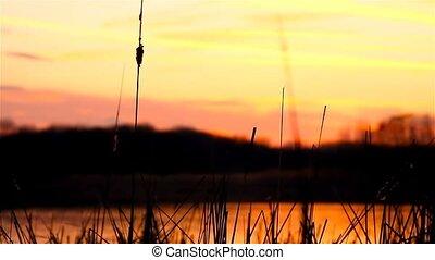 river landscape bulrush grass at sunset orange nature -...