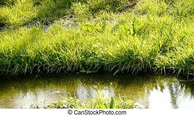 river., mauvaises herbes