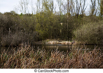 River Misbourne in the Chilterns, England - Rushes along a...