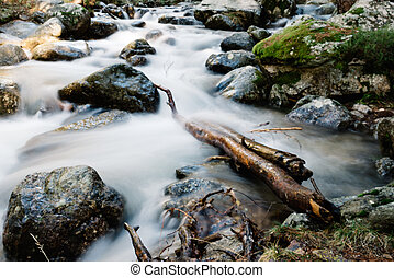 River of mountain crossing a forest.