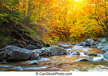 River on autum forest. Beautiful autumn foliage, waterfalls and mountain stream in the forest