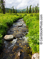 River on meadow
