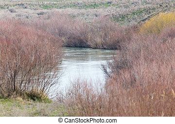 river overgrown