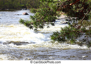 River rapids and pine branch