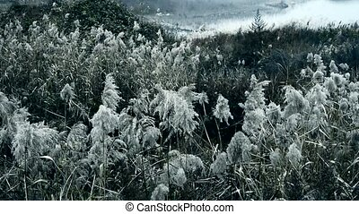 river reeds in wind, shaking wilderness, Black and white style.