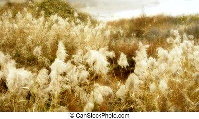 river reeds in wind, shaking wilderness, bright sunshine, sunset, sunrise, Hazy style.