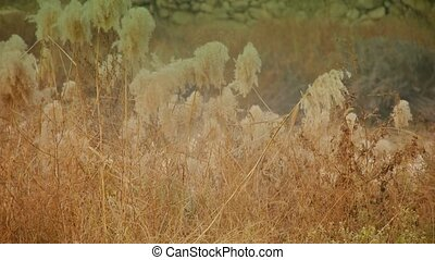 river reeds in wind, shaking wilderness, Hazy style.