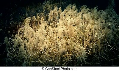 river reeds in wind, shaking wilderness.