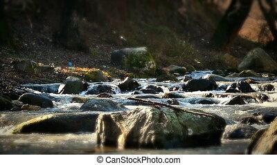 river rock tree autumn