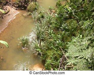 River running through tropical rainforest