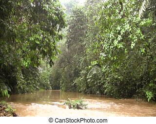 River running through tropical rainforest - In the...