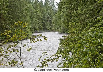 River Rushing Through Trees