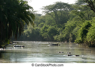 River - Serengeti Safari, Tanzania, Africa - Serengeti...