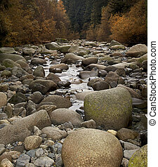 River - stony river with forest scene