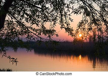 River, summer, tree at sunset