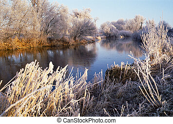 River, trees and reeds frozen - The river Le doubs by winter...